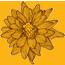Genie Creative Graphic design flower
