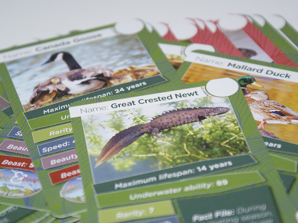 "Graphic design and production of ""Beauty & Beasts of the river"" educational card game"